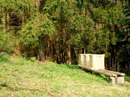 Der erste Standplatz am Waldrand