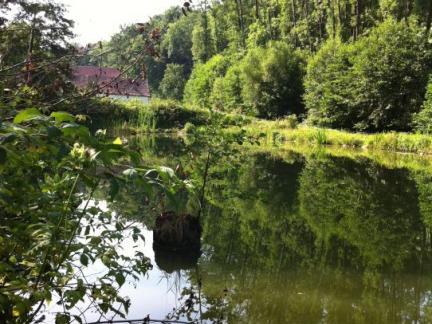 Unterer Teich Juli 12