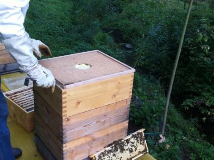 Dank dieser Bienenfalle sind beim Herausnehmen nicht mehr ...