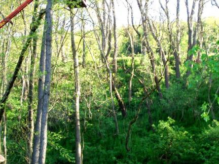 Bäume fällen vor dem Renovieren des Backofens