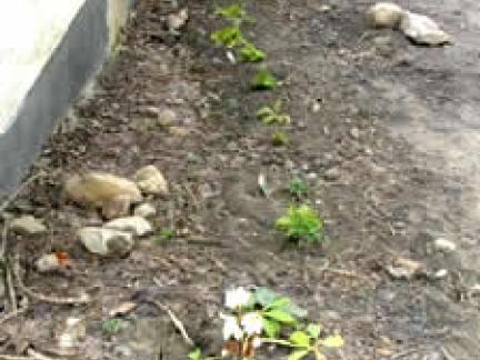 Frühling 06: Die Farnzeile entsteht