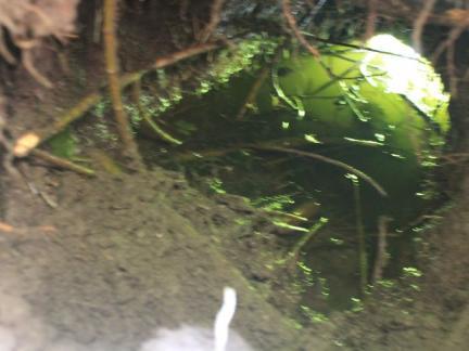 Typisch der Ausgang in den Teich