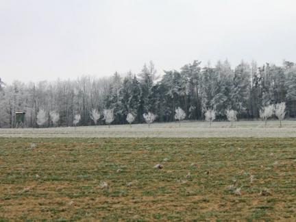 Frost statt Schnee