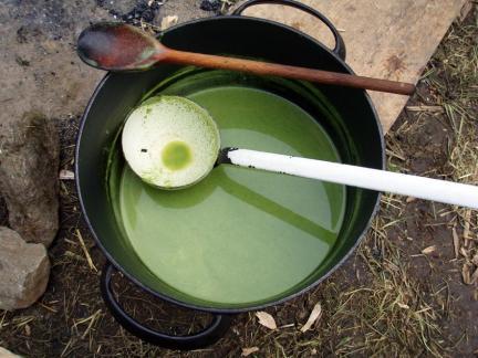 Zum Beispiel Suppe aus Kohlkratzdistel