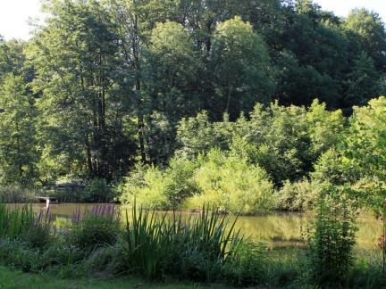 Oberer Teich mit Insel Juli 13