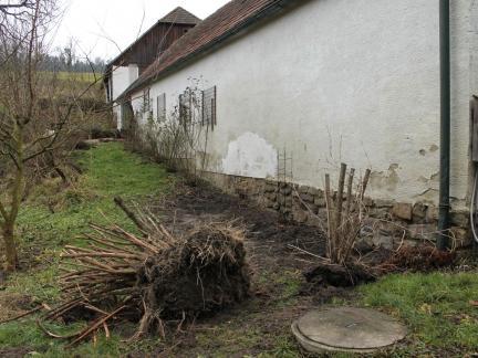 Zu große Büsche werden versetzt (mit Baggerhilfe)
