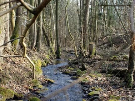 Feb.14, unten im Wald