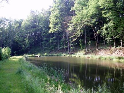 Unterer Teich, Juni 08